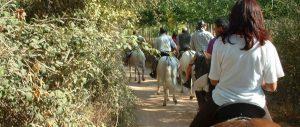 rutas a caballo por el campo de Montiel